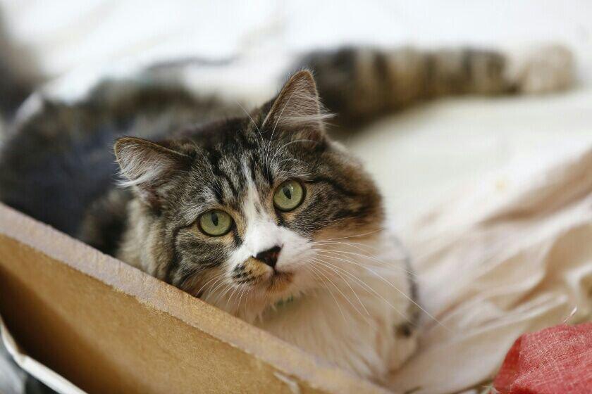 Gato de médica assassinada aguarda novo lar