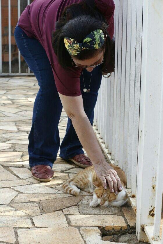 Ana Lucia tem ajudado com a adoção dos animais