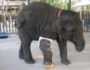 Friends of the Asian Elephant Foundation
