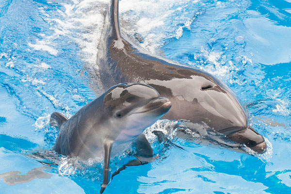 Mike Aguilera/SeaWorld San Diego/Getty Images