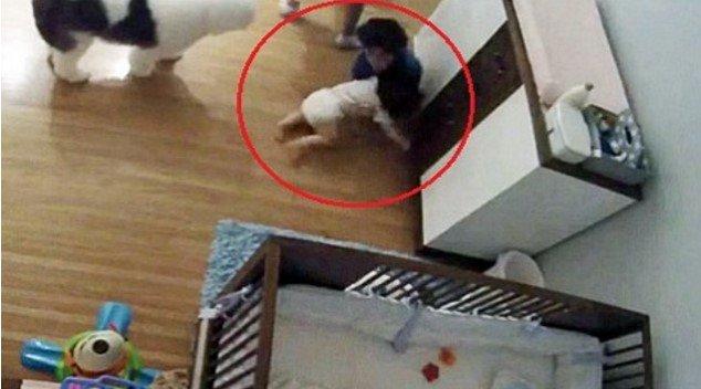 Menino virou herói por amparar queda do irmão de 11 meses
