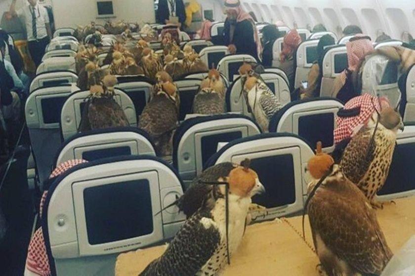 Príncipe saudita compra assentos em voo para seus 80 falcões