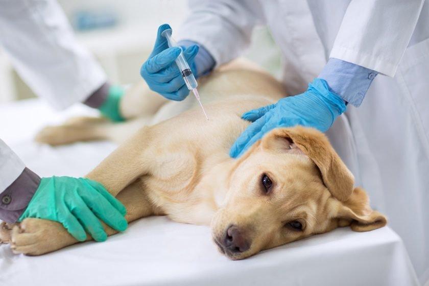Ministério da Agricultura vai contratar 300 médicos veterinários