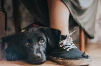 Maria Davison/ Kennel Club