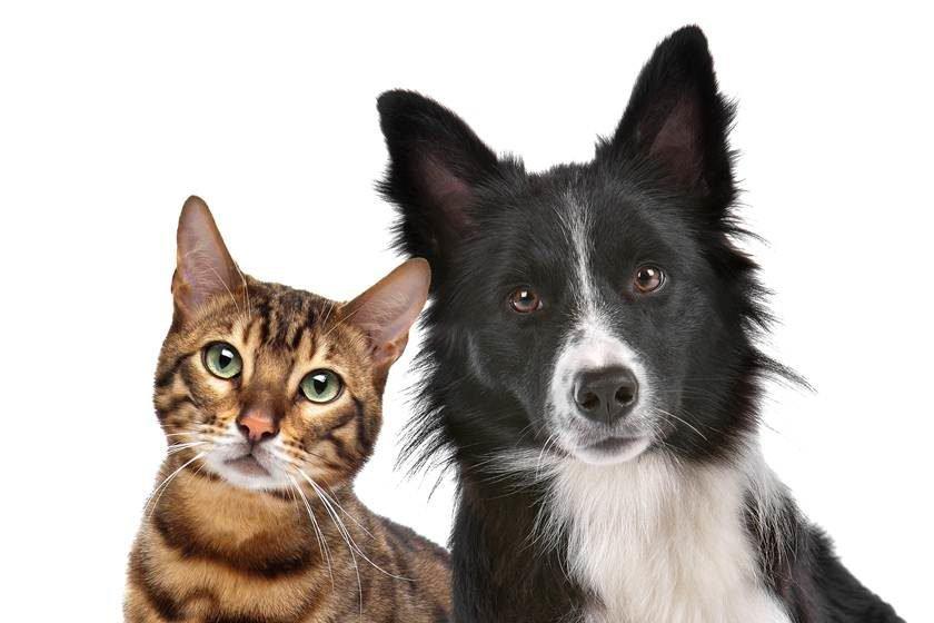 eb790350267a9 Mitos e verdades sobre adoção de cães e gatos