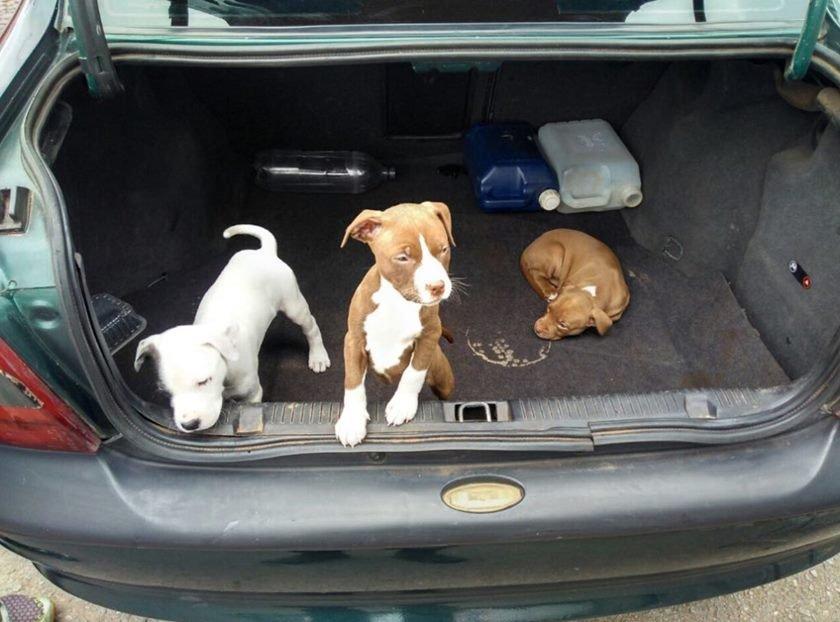 Cães feira 2