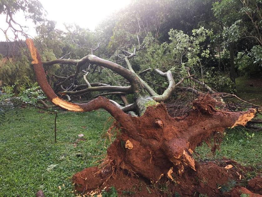 queda de árvores (1)