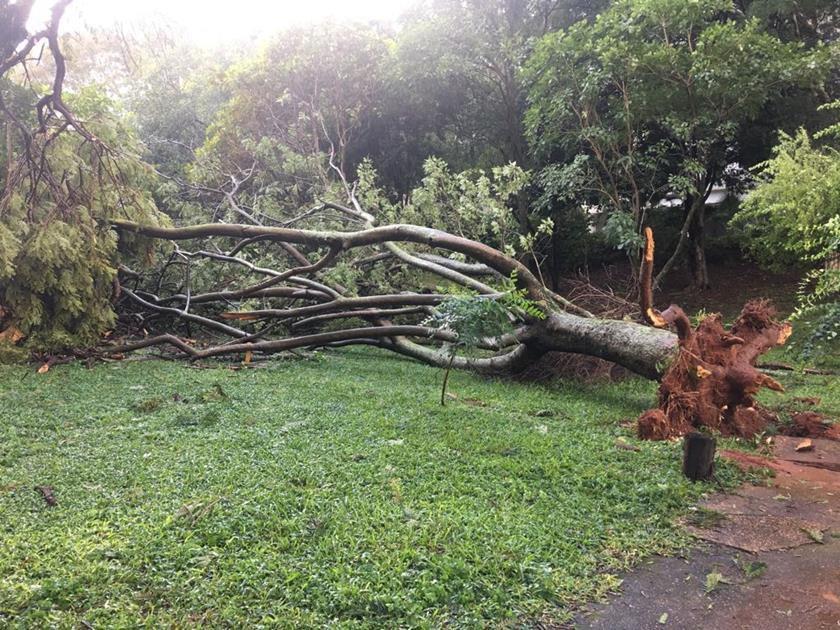 queda de árvores (2)