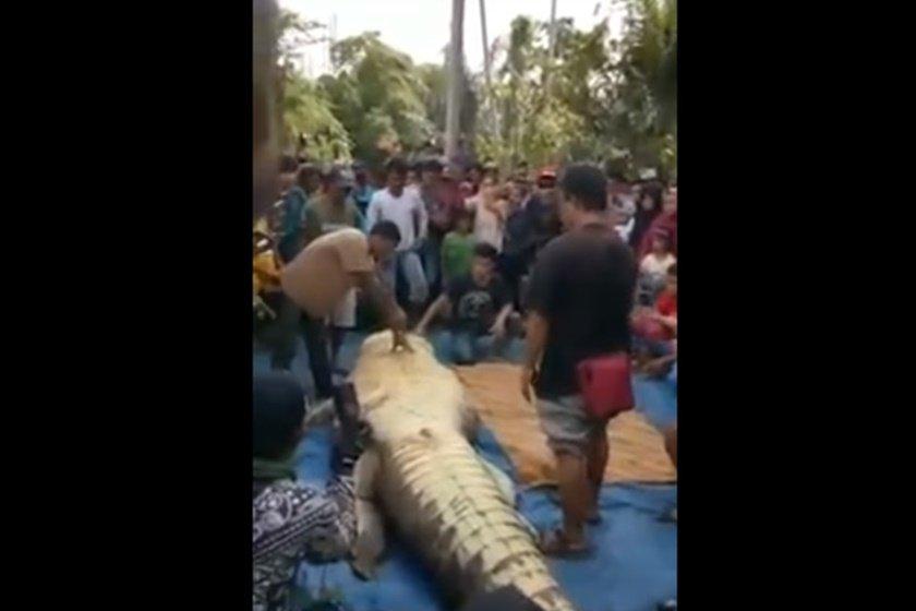 crocodilo 2