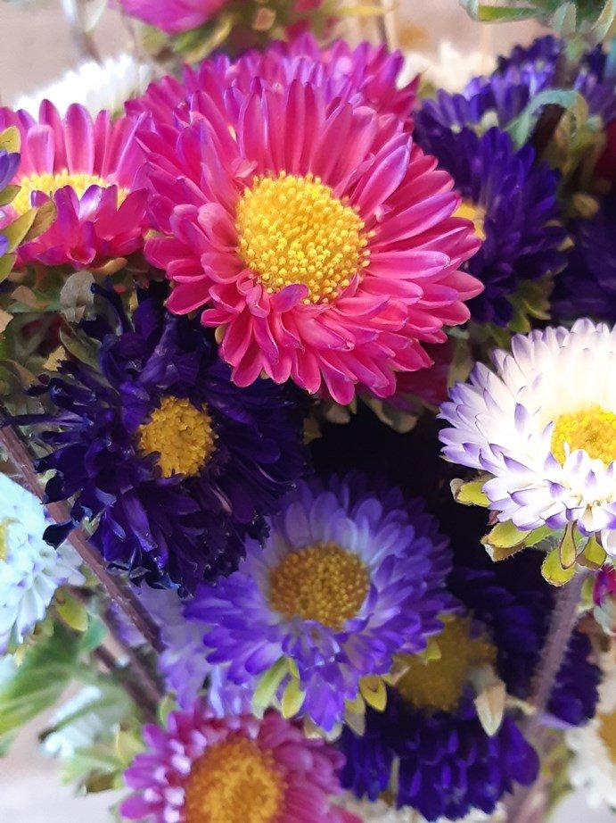 Flores 2 - cores