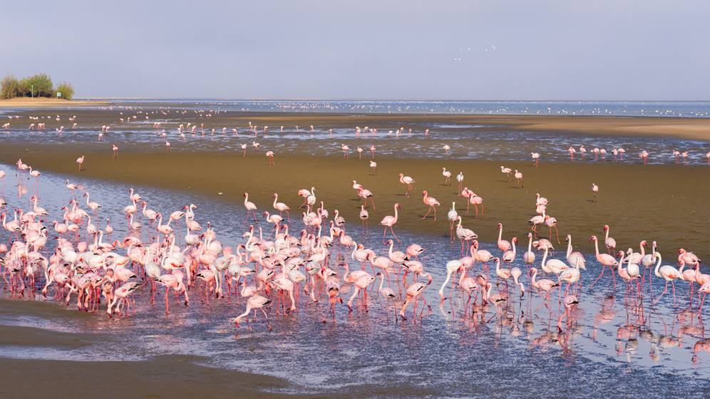 Pink flamingos at Walvis Bay, Namibia, Africa