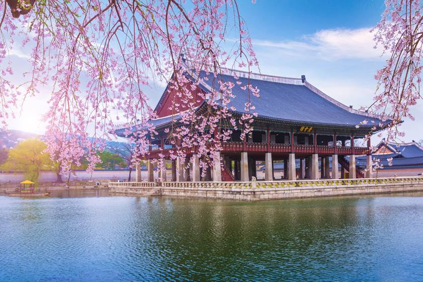 gyeongbokgung palace in spring