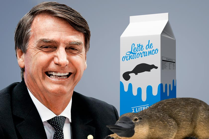 O assunto virou tema de diversos memes após um vídeo gravado pelo deputado Jair Bolsonaro. Nesta infografia, mostramos que bicho é esse