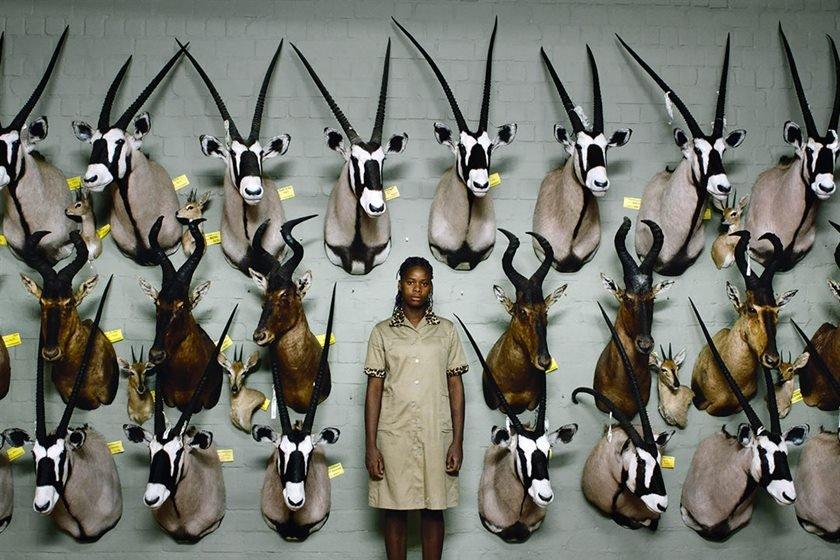 safari cred Neue Visionen Filmverleih