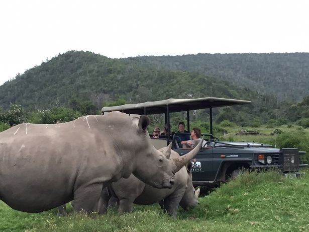 Gang-of-poachers-broke-into-South-African-game-reserve-to-slaughter-rhinos-attacked-and-EATEN-by-pri3