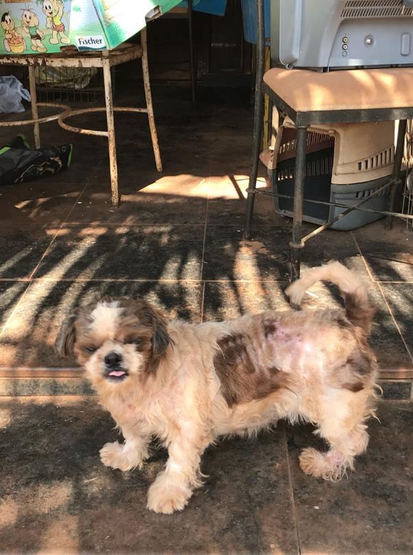 Cachorros maltratados