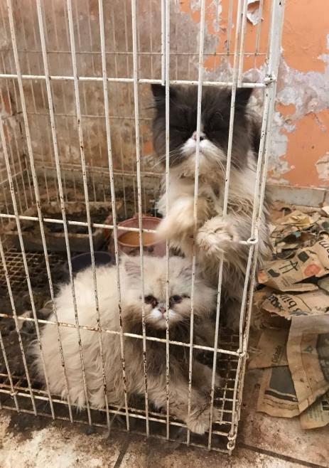 Animais maltratados 6