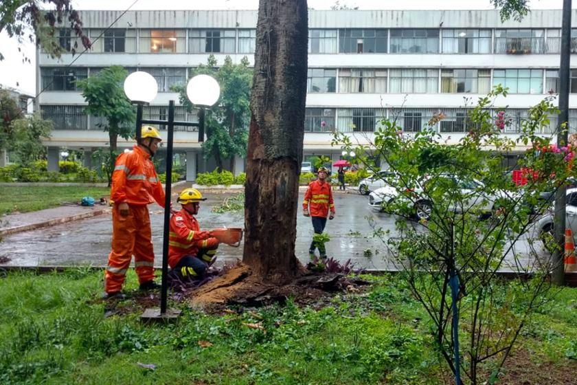 bombeiros corte árvore 403 norte