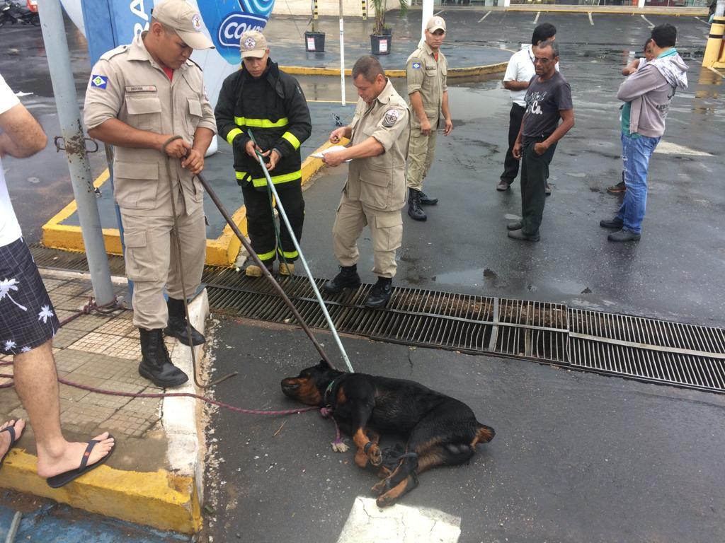 Segurança Do Carrefour é Acusado De Matar Cachorro A