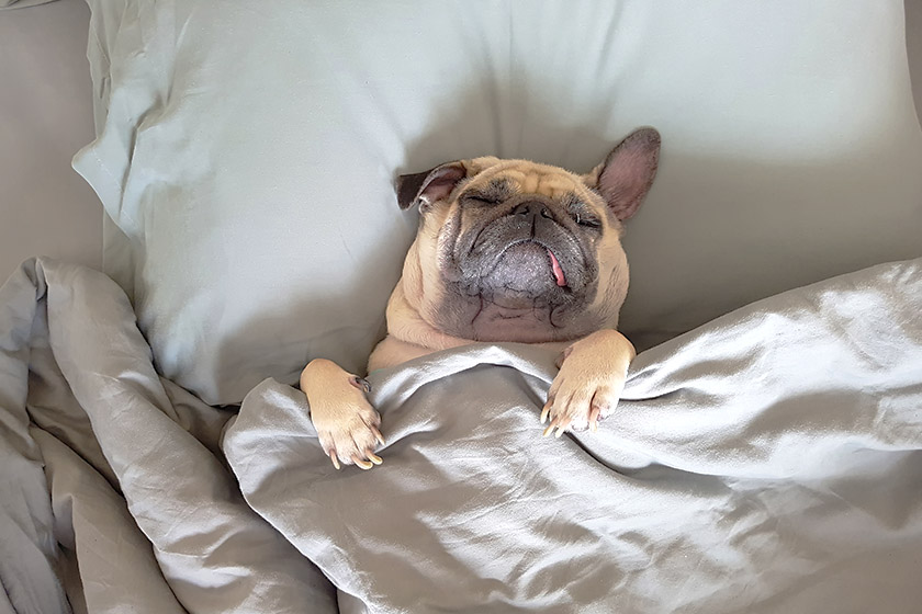 Necessidade de oito horas de sono por noite é mito, diz especialista