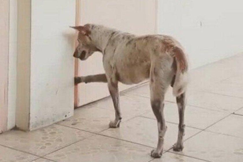 Resultado de imagem para Cachorro chama atenção ao visitar universidade buscando professor que morreu, veja o vídeo