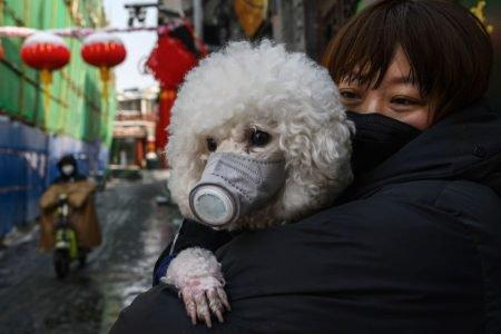 cachorro com máscara