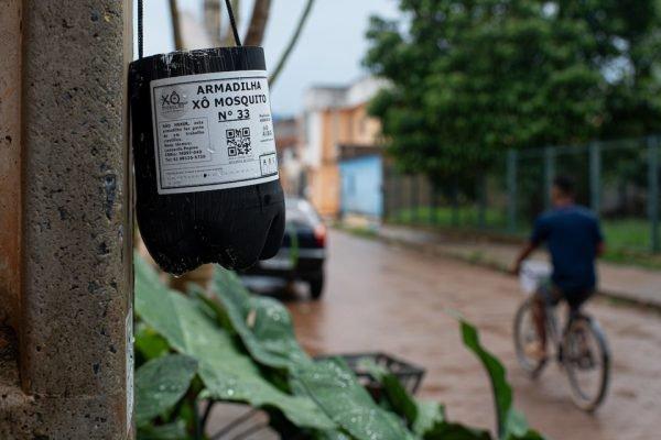 Em meio a alta de casos de dengue, população toma iniciativa contra o mosquito Local: Cidade Estrutural
