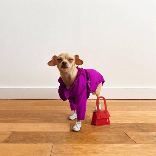 Boobie Billie, a cadela fashionista