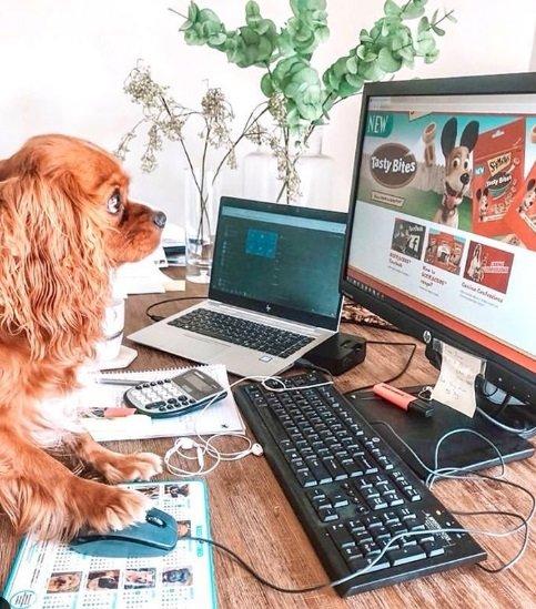 Pets trabalhando