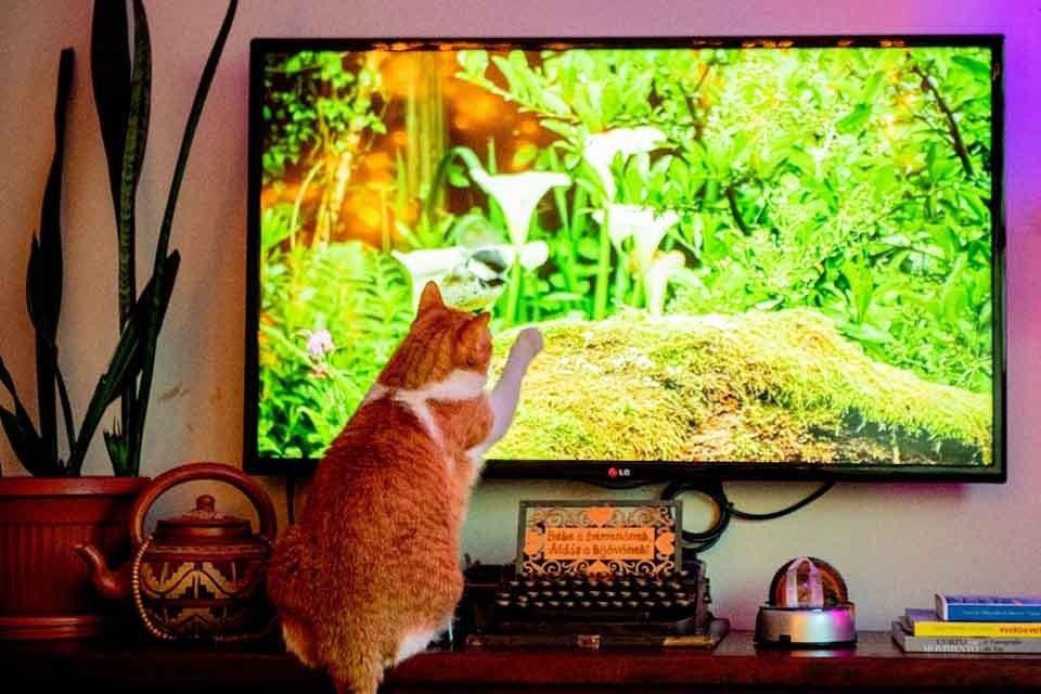 Gato na TV