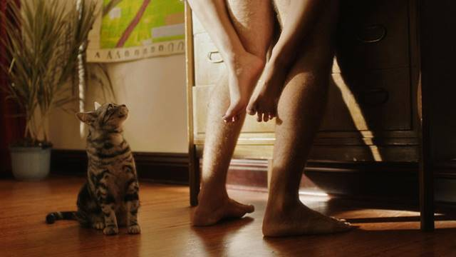 Gato olhando casal