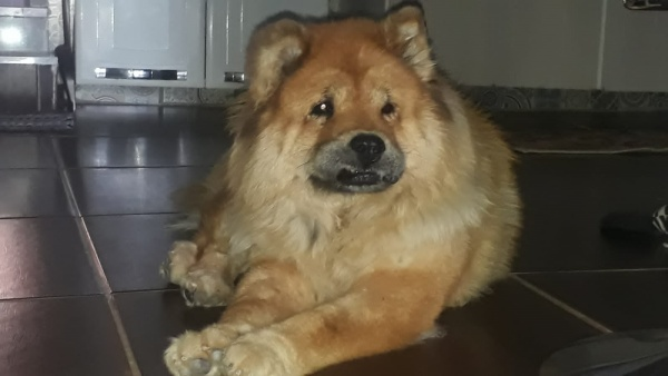 Com dois nódulos, cadela do DF precisa de ajuda para realizar cirurgia