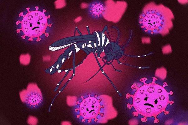 Arte mosquito da dengue e coronavírus