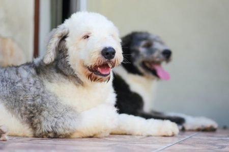 Cachorro pets é o bicho