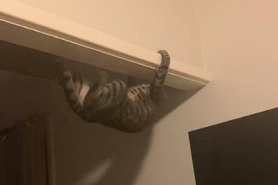 Gatinha bomba na web por sua habilidade de escalar paredes