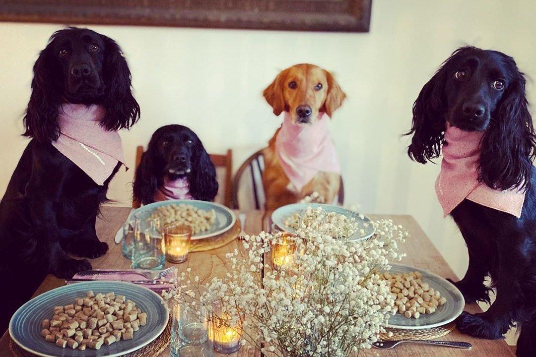 Cachorros à mesa