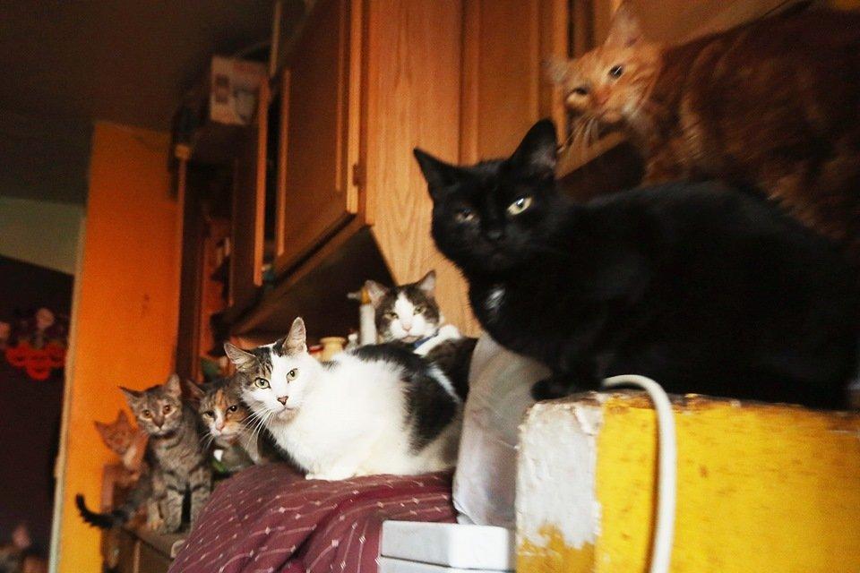 Gatos em ambiente fechado