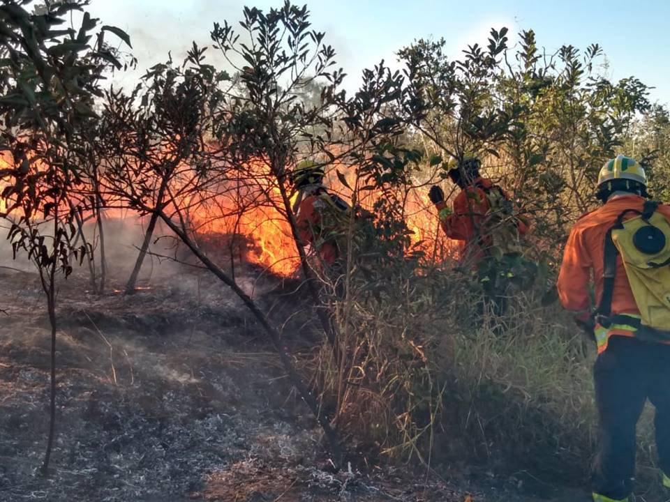 Incêndio no Parque Burle Marx, no Noroeste