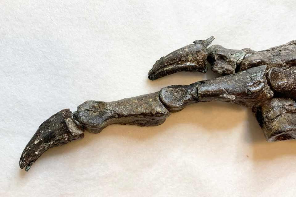 Fóssil viveu há mais de 150 milhões de anos