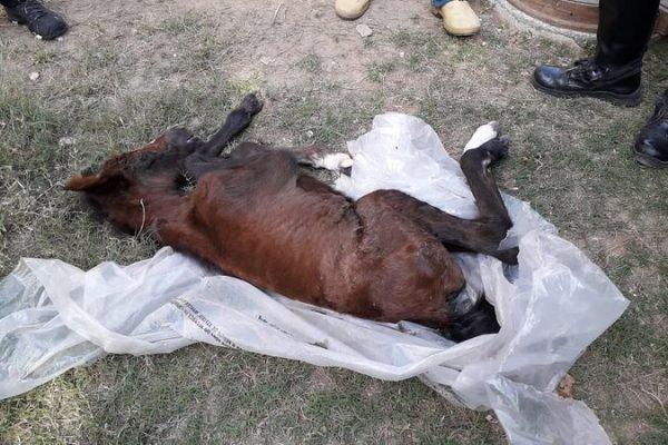 Com risco de morte, filhote de égua é resgatada em terreno baldio