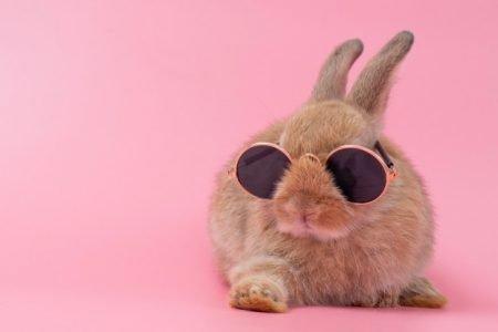 Coelho de óculos