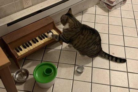 Gatinha com piano