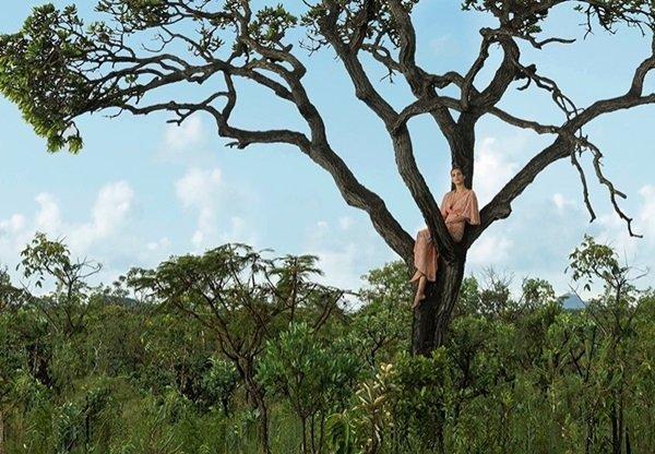 Modelo em cima de uma árvore