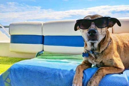 Cachorro de óculos escuros no sol