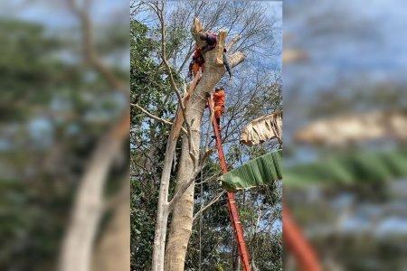 Bombeiros usam escada para resgatar homem em árvore