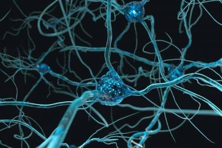 neuronios e nervos