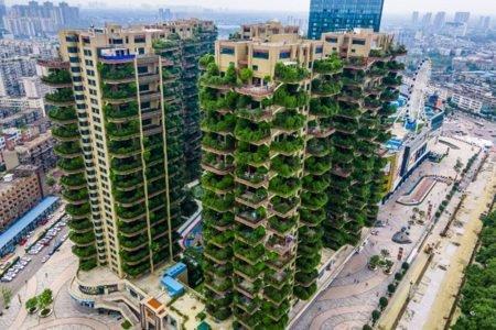 Plants overrun apartment blocks in Chengdu City