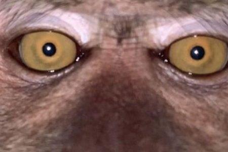 Selfie de macaco