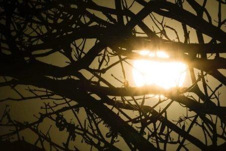 Calor: sol detrás de galhos de árvore