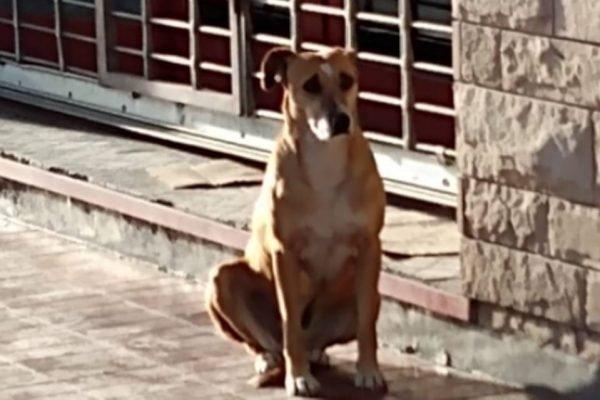 Cadela espera encontrar a dona morta em porta de loha